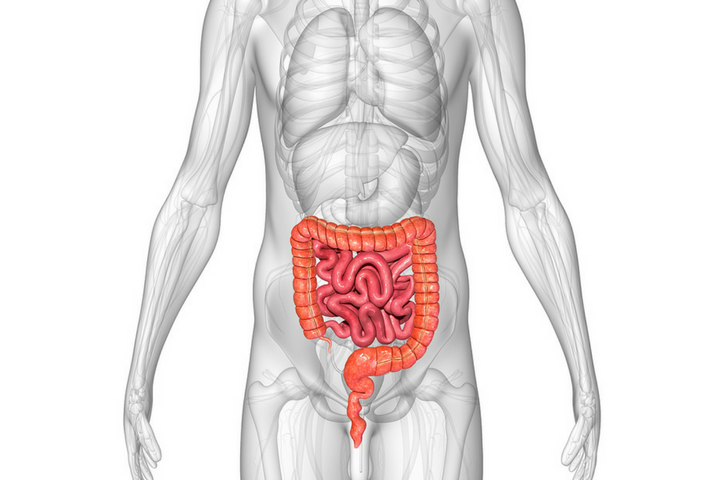 What Is Sibo And Could It Be A Driver Of Your Digestive